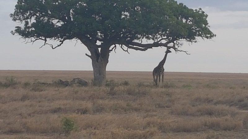 Tansania-Fahrt im Herbst 2019